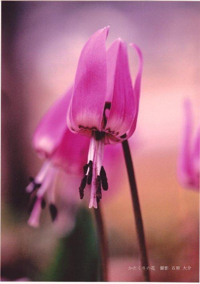 かたくりの花に魅せられて ポスターの画像1枚目