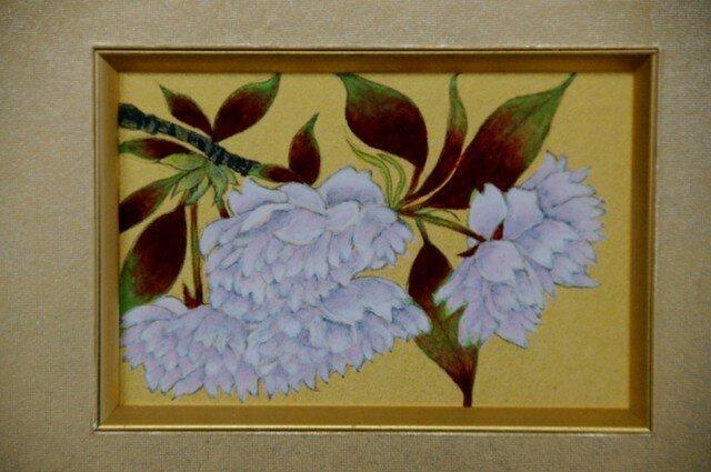 八重桜の画像1枚目