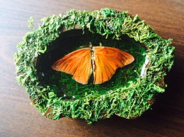 蝶の壁掛け標本の画像1枚目