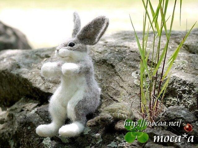 野兎の子:八兵衛【貴方のウサギのぬいぐるみ作ります】の画像1枚目