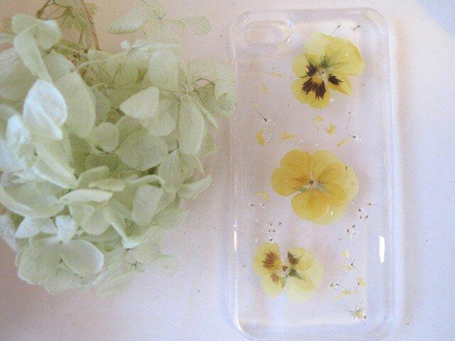 iPhone5 5s パンジー 黄色の画像1枚目
