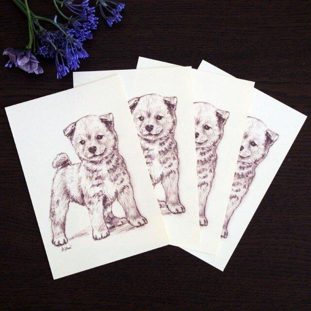 ポストカード 柴犬「次はどこへ行こう」 同柄4枚の画像1枚目