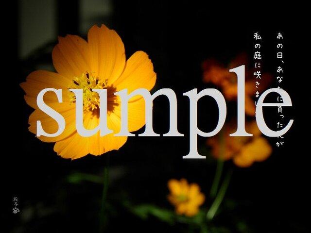 言葉*『あの日あなたに貰った花が私の庭に咲きました』2枚組みの画像1枚目