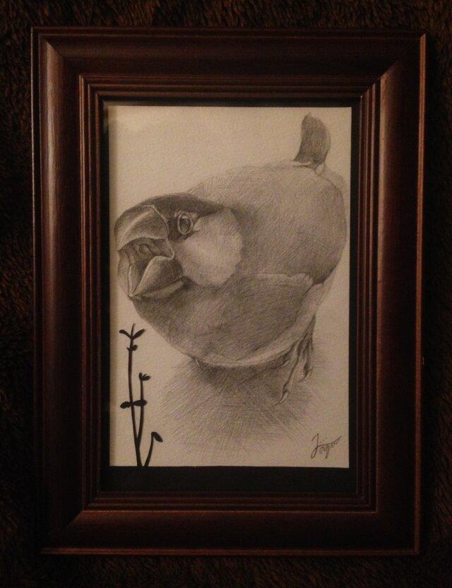 [リクエスト]s様 文鳥 - sakura -の画像1枚目