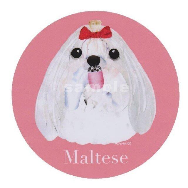 マルチーズ/ロングヘアー《犬種名ステッカー/小型犬》の画像1枚目