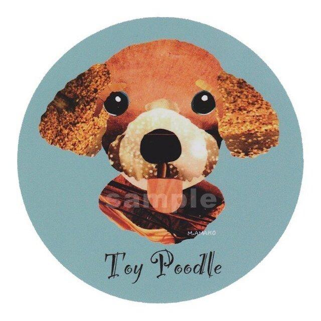トイ プードル/アプリコット《犬種名ステッカー/小型犬》の画像1枚目