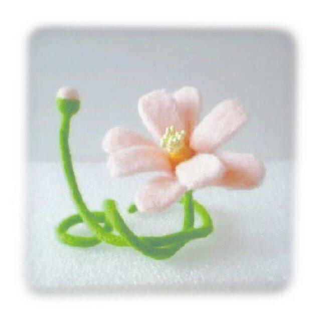 花[コスモス]の画像1枚目