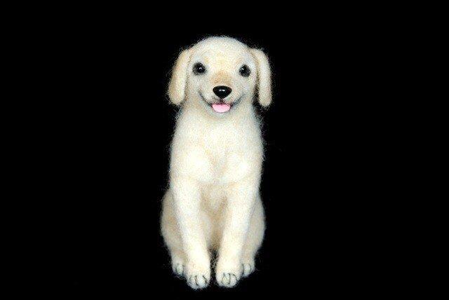 ラブラドールレトリバー 犬 の画像1枚目