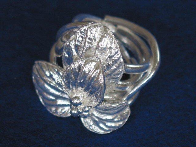 ペペロミア ミクエリアナのリング  Iの画像1枚目