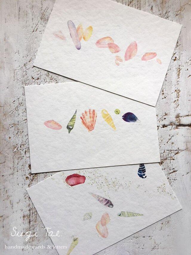 海がくれたもの*再販 〜貝殻のカード2の画像1枚目