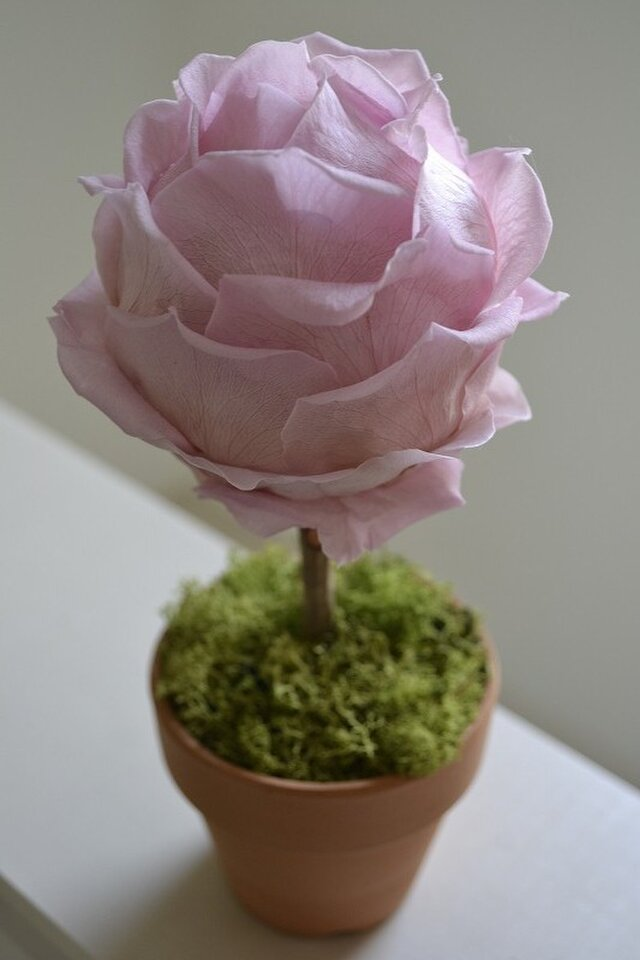 Flower topiary S (p)の画像1枚目