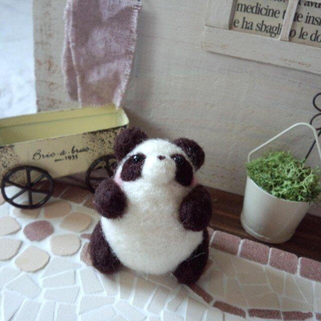 ぷっくりパンダ(A)の画像1枚目