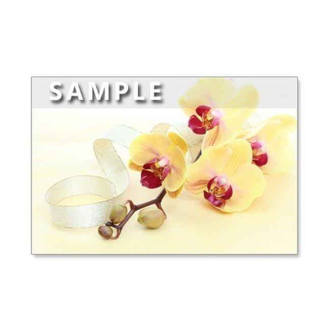 47)ポストカード5枚組 艶やかで美しい洋ランの花たちの画像1枚目