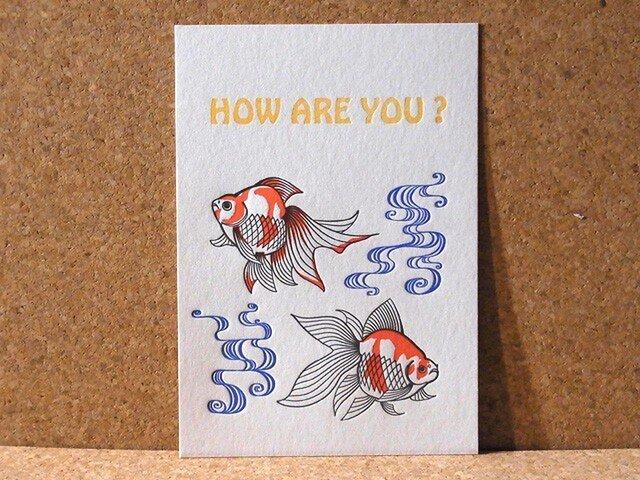レタープレスカード金魚/3枚セットの画像1枚目