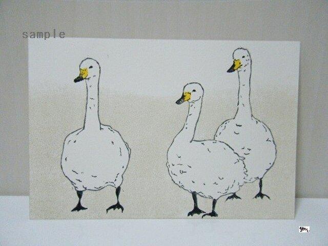 葉書〈swan-1〉の画像1枚目