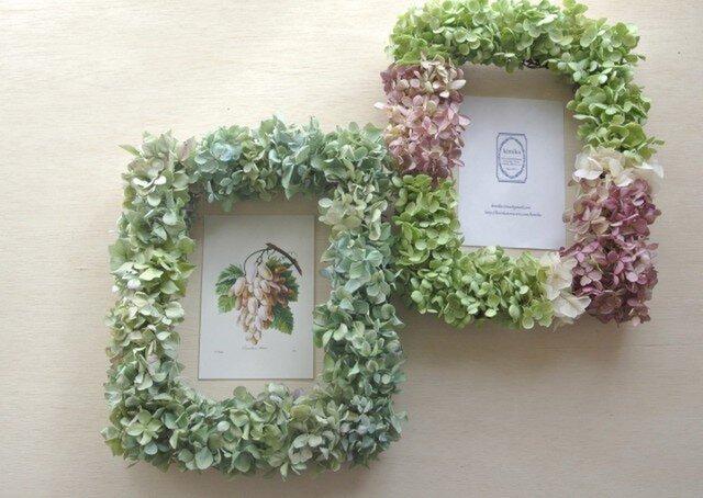 紫陽花のframe wreath-minaduki-の画像1枚目