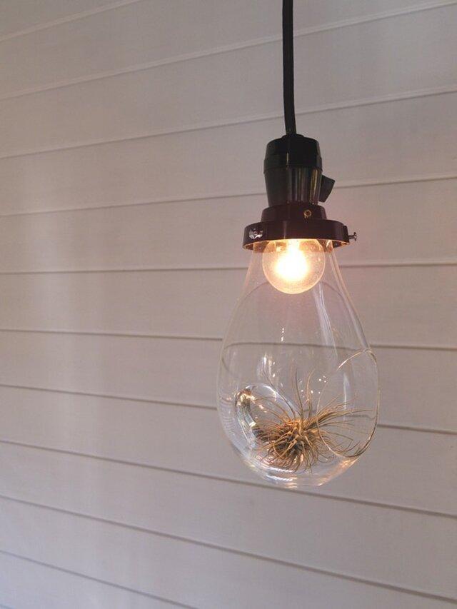 ランプ型テラリウム「air-rium」ten-drop 時澤真美の画像1枚目