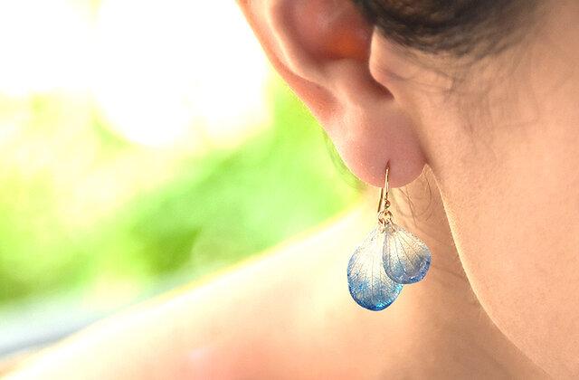 アジサイ【藍染】ふたつ花片のピアス 14kgf /イヤリングの画像1枚目