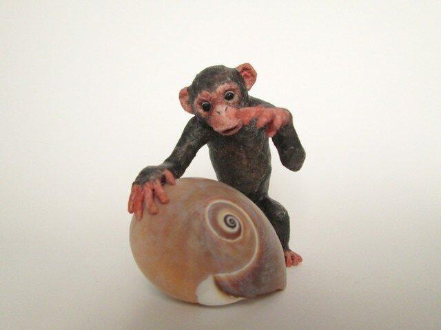 貝がら ミニチュア チンパンジーの画像1枚目