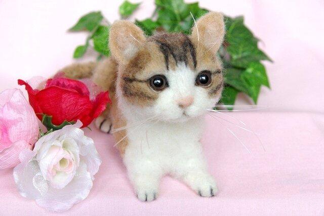 可愛い子猫ちゃんの画像1枚目