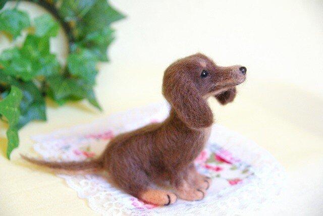 ★【ダックスフント チョコ タン 犬】の画像1枚目