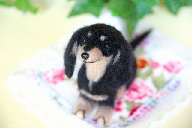 ★【ダックスフント ブラック タン 犬】の画像1枚目