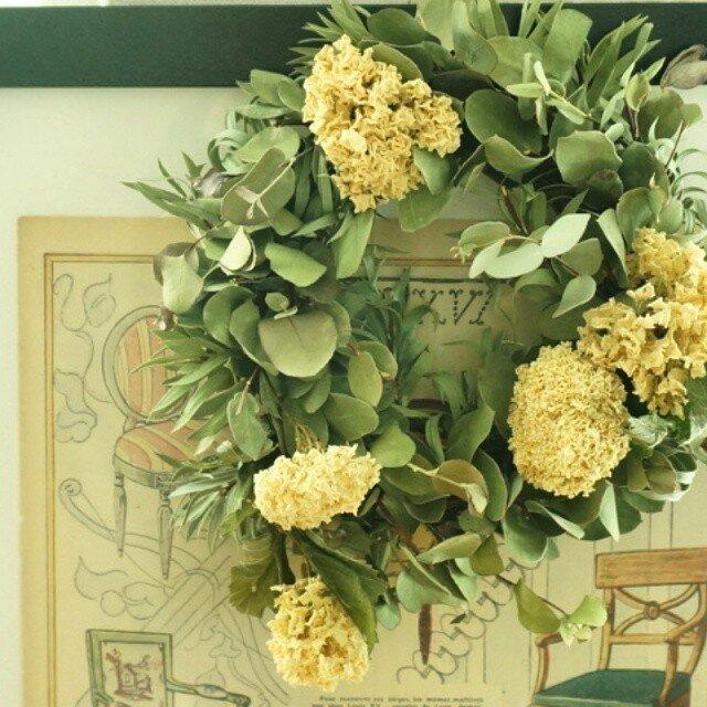 ユーカリ 大テマリ wreathの画像1枚目
