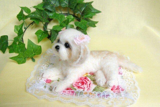 ★【シーズーちゃん アルパカと羊毛使い 犬】の画像1枚目