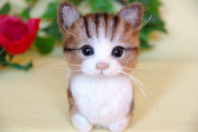 【香箱座り】 まったり猫ちゃん 2の画像1枚目