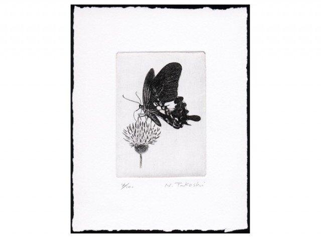 蝶とアザミ / 銅版画 (作品のみ)の画像1枚目