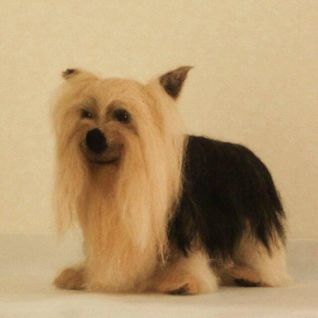 羊毛フェルトで作るリアル犬(ヨークシャーテリア)の画像1枚目