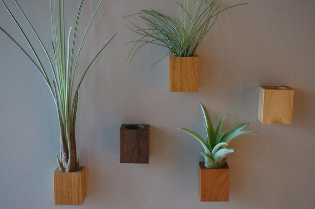 air-plants holder mの画像1枚目