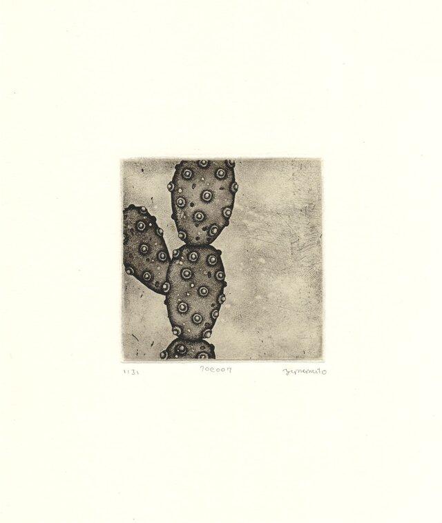 多肉植物の銅版画04の画像1枚目