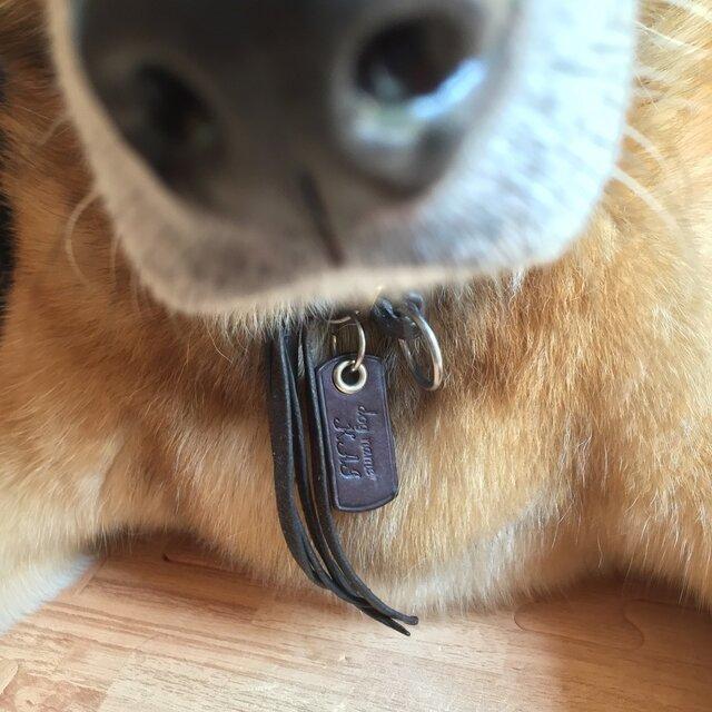 Dog tag  ドックタグ の画像1枚目