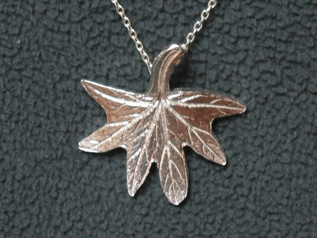 もみじ葉ゼラニウムの葉の画像1枚目