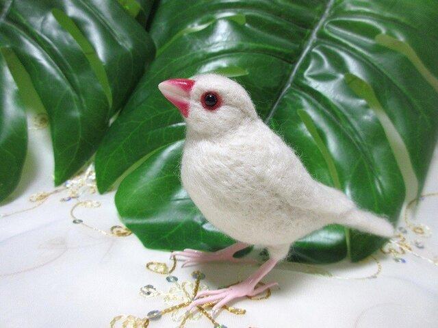羊毛フェルト かわいい白文鳥の画像1枚目