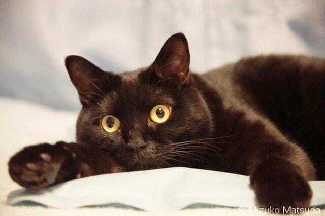 ポストカード 黒猫ヴィヴィ⑥ 5枚セットの画像1枚目