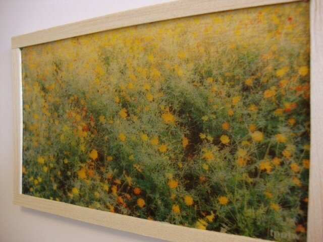 yellow flowersの画像1枚目