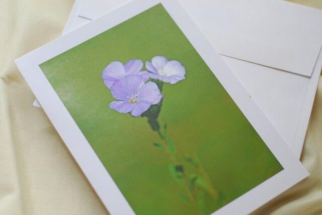 【グリーティングカード】flowers No.2 プラチナの画像1枚目