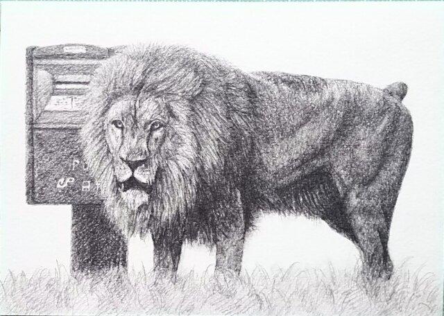 草原のライオンの画像1枚目