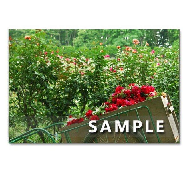 1018)「華やかなバラたち 1018」  5枚組ポストカードの画像1枚目