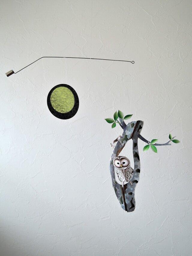 樹洞のフクロウの画像1枚目