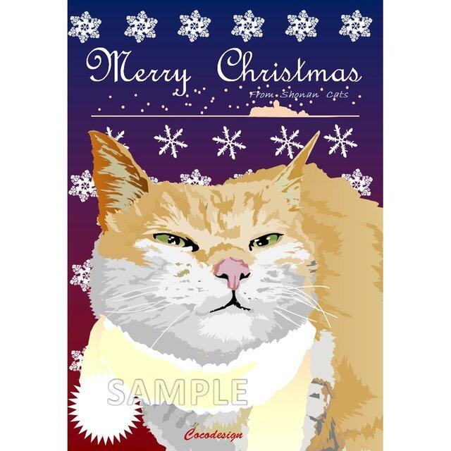 ポストカード 湘南Catsのクリスマス ⑥ シルバー猫の画像1枚目