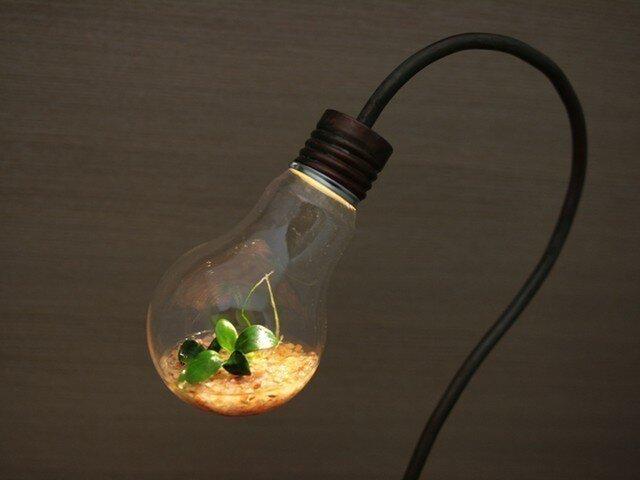 bulb terrariumの画像1枚目