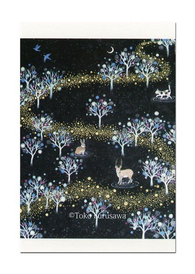 選べるポストカード(4枚)NO.1「銀河の森」の画像1枚目