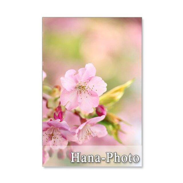 1040)「桜・・・5種類のさ・く・ら」  5枚組ポストカードの画像1枚目