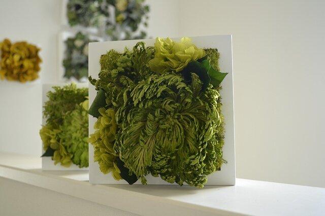 Interior green M(ヒバ)Wクリアケース入りの画像1枚目