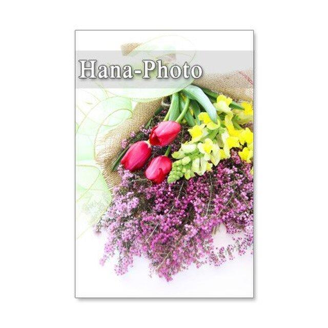1056)エリカ(ヒース)、チューリップ、金魚草、ガーベラ 5枚組ポストカードの画像1枚目