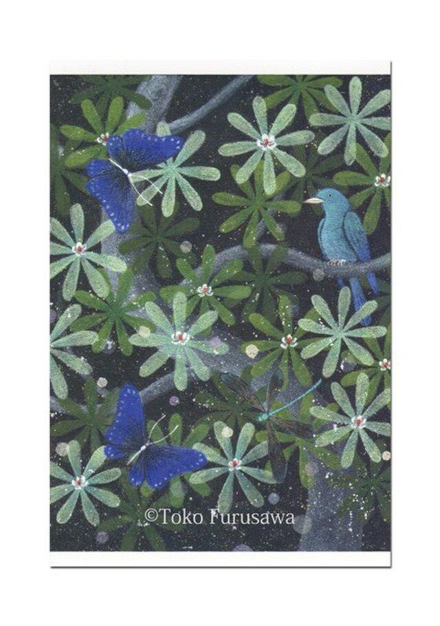 選べるポストカード(4枚)NO.7「集い」の画像1枚目