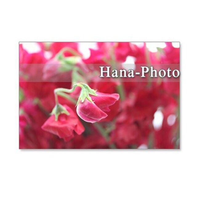 1057)聖子さんの赤いスイトピー  5枚組ポストカードの画像1枚目